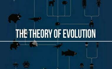 the-theory-of-evolution-explained