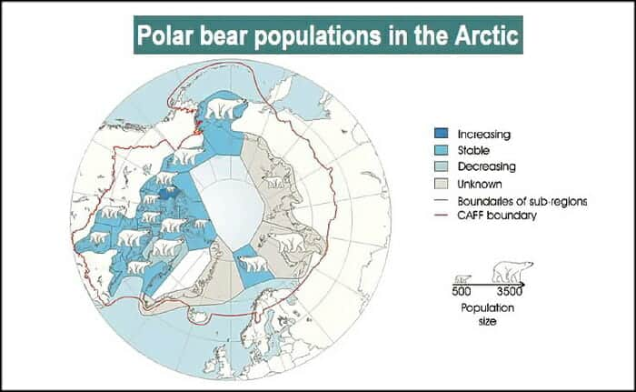 Polar Bear Numbers United Nation