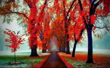 Trees Path 380