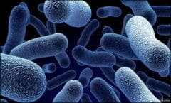 bacteria-antiobiotics-super-bug